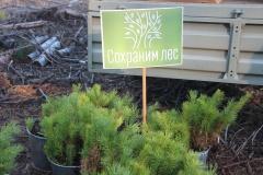 В Лодейном Поле прошла акция «Сохраним лес»